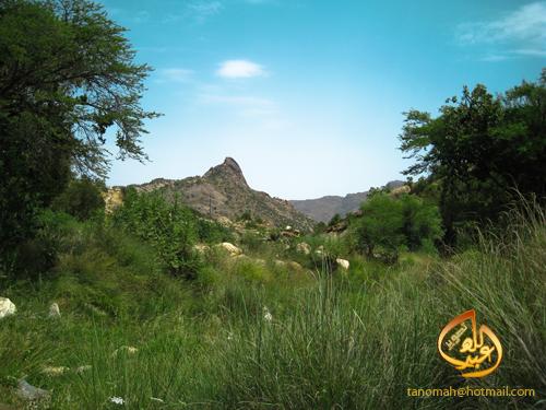 1430 1 - منظر التقطته من وادي المطعن بتنومة