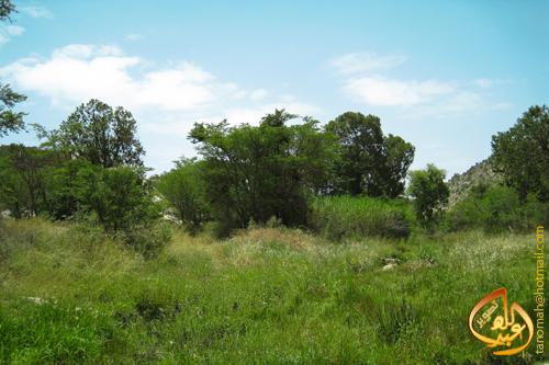 1430 2 - منظر جميل للخضرة بوادي المطعن