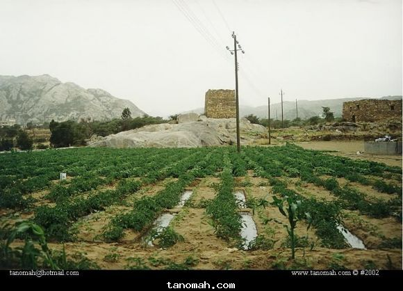 مزرعة روضة ويظهر الحصن الأثري الشهير  1422