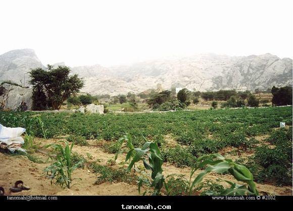 مزرعة روضة في شمال تنومة عام 1422