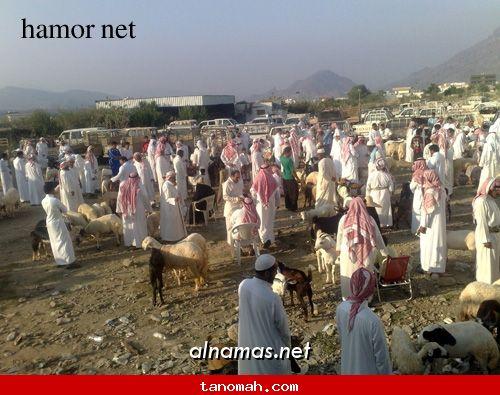 سوق خاط - عدسة هامور نت - موقع النماص
