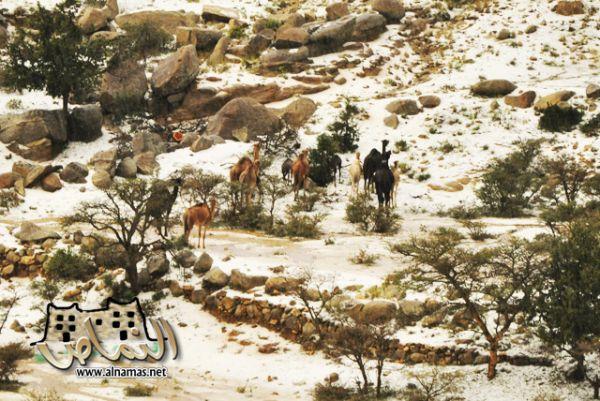 الحق ...صور....أمطار وبرد النماص يوم الاثنين 20/4/1431هـ  تصويرة الشبا - جناح الطير - النماص