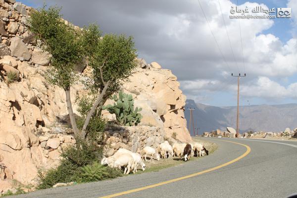 جبل بركوك ...الجبل الشامخ والطبيعة الساحرة