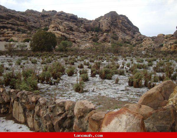 صور من الأمطار التي هطلت يوم أمس الخميس الموافق 8/5/1431هـ على جبل منعاء