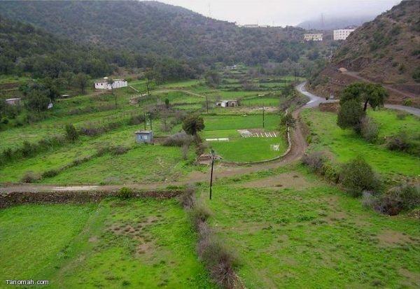 مناظر من الديرة بعد الامطارالتي شهدتها هذا العام
