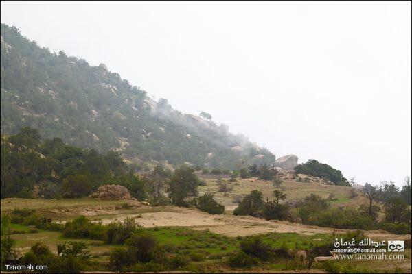 منظر للضباب وهو يغطي غابات وادي الدغنة - تنومة