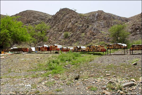 مناحل في وادي عيا