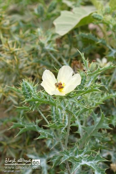 بعض النباتات في وادي عيا