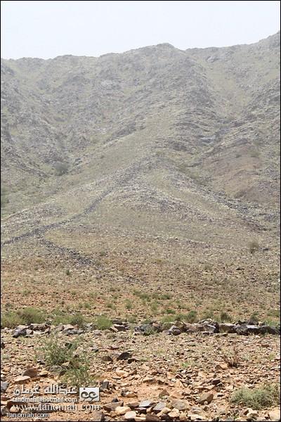 العشب النابت في سفوح جبال وادي عيا