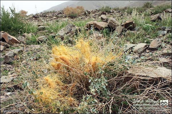 انواع من النباتات في وادي عيا