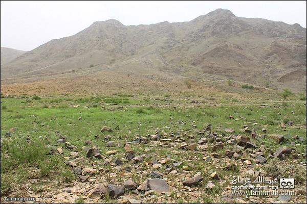 البرية تكتسي باللون الاخضر  في وادي عيا