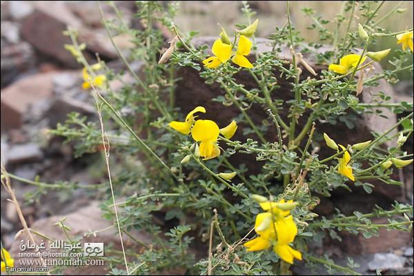 بعض الزهور الجميلة في وادي عيا