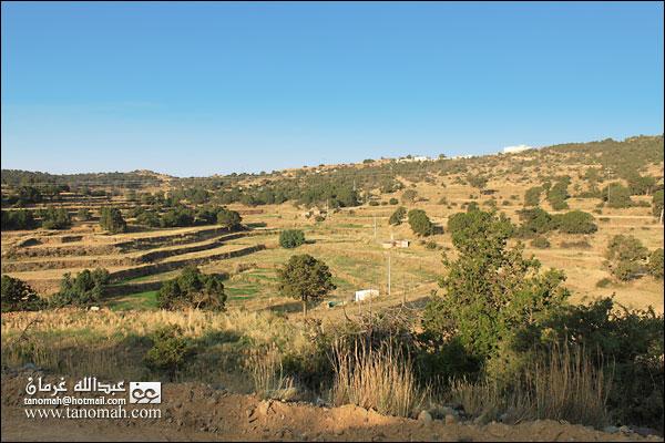 المدرجات الزراعية على  طريق عقبة الجعدة ببللحمر