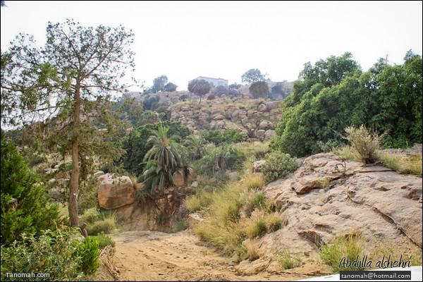 منظر للطبيعة في أعلى ساقين بتنومة (عدسة عبدالله غرمان)