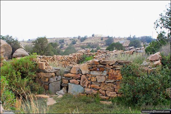 بقايا منزل أثري في الأربوعة (عدسة عبدالله غرمان)