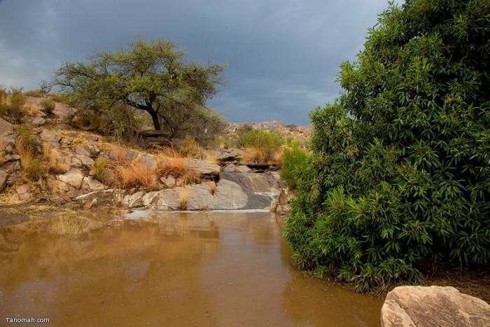 ضواحي تنومة  بعد يوم ماطر  (عدسة : رائد عثمان )