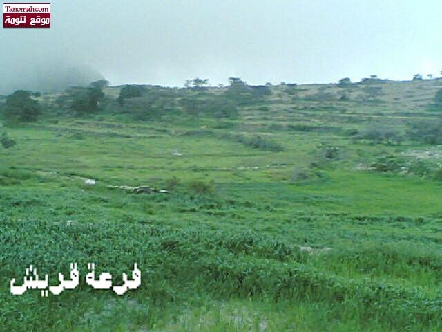 صور من قريتي - أبو شهد