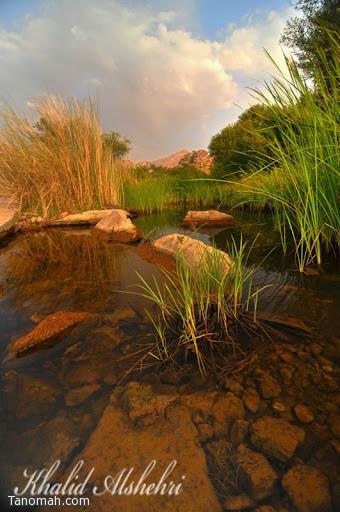 المياه الجارية في وادي بقرية ال خضاري شمال شرق تنومة - عدسة خالد عبدالرحمن