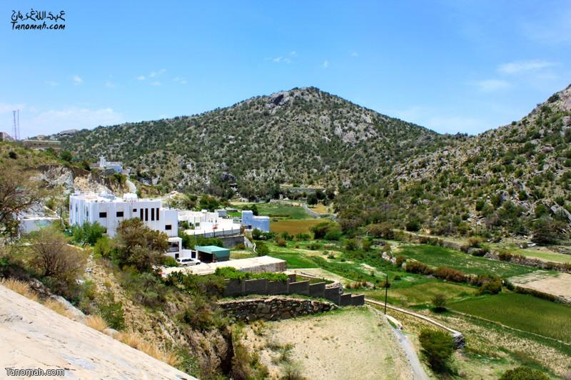 الدرجات الزراعية في وادي الغر ... عدسة عبدالله بن غرمان