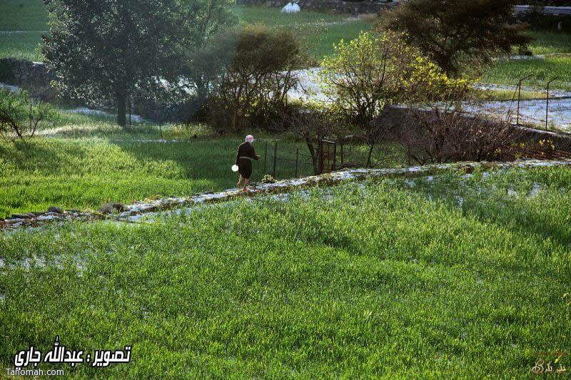 بَرد وامطار صدريد ليوم الثلاثاء 14/5/1434هـ (عدسة عدالله بن جاري)