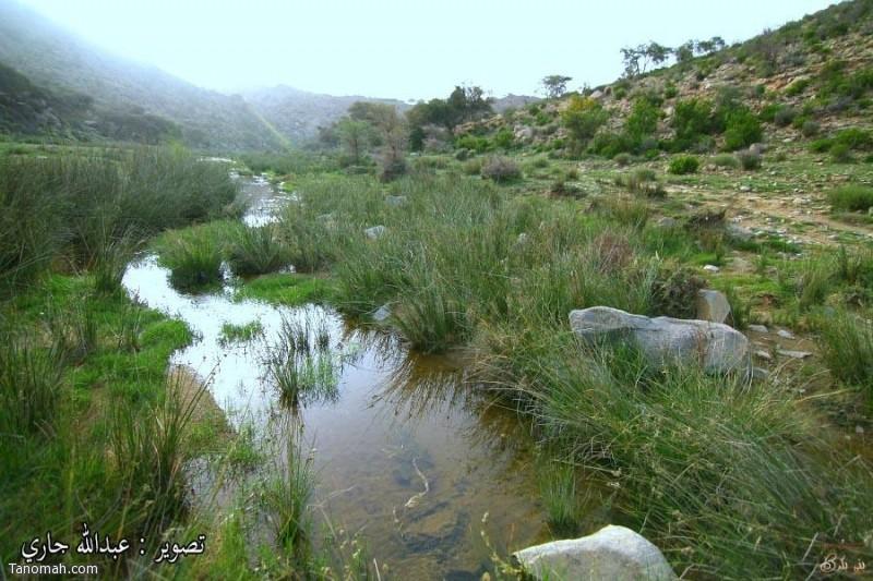 وادي شعبان يقع شرق النماص -عدسة عبدالله جاري