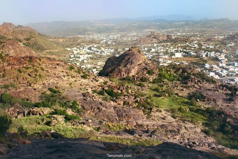 تنومة من جبل منعاء - عدسة عبدالله غرمان