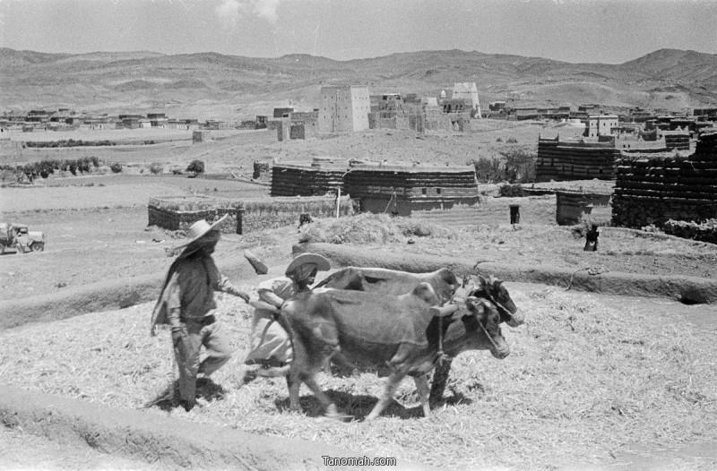 الدويس في احدى ضواحي مدينة ابها - التقطت الصورة عام 1945 للمصور  ولفرد ثيسقر - المصدر متحف اكسفرد