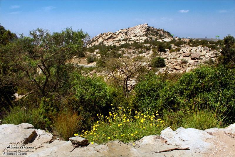 """صورة من منتزه """"الحيفة"""" جنوب غرب محافظة تنومة .."""