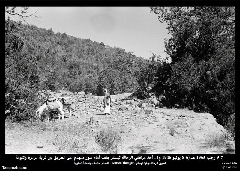 أحد مرافقي الرحالة ثيسقر يقف أمام سور مهدم على طريق قرية عرعرة وتنومة