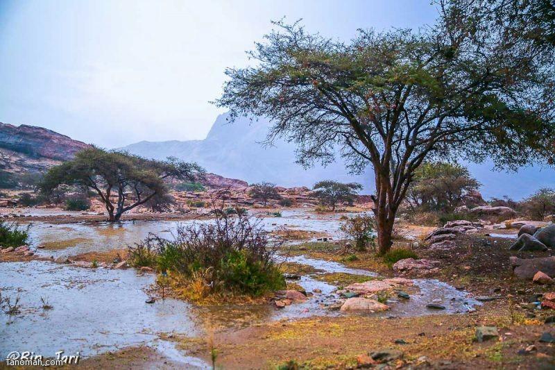 لقطات من أمطار تنومة الإثنين 18 جمادى الأولى 1436 هـ - عدسة بن جاري