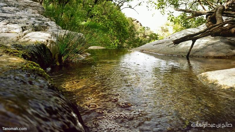 الخضرة والمياه في حصيص - بتنومة - عدسة صالح بن عبدالوهاب