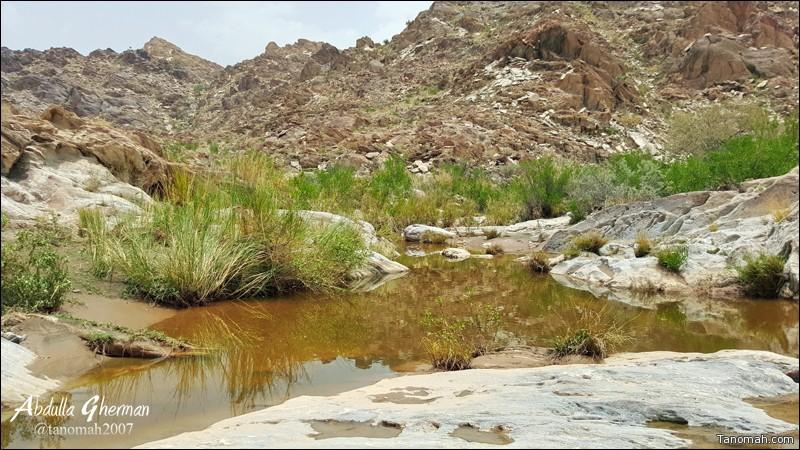 لقطة من أحد الأودية شرق تنومة - عدسة عبدالله غرمان
