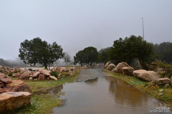 تنومة ترتوي بماء المطر  الثلاثاء 10 ذو القعدة 1436هـ عدسة بن جايز