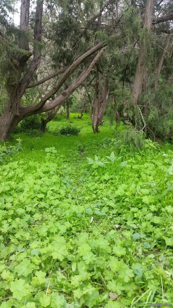 منتزه الحيفة بمحافظة #تنومة طبيعة خضراء على مدار العام عدسة : عبدالله الشهري