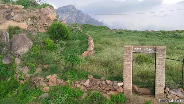 #صورة لـ #الطبيعة الخضراء في جبل ضرم عدسة: عبدالله البارقي