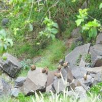 """#صورة لعائلة من """"الوبر"""" التقطت في جبال #فيفا امنة مستقرة"""