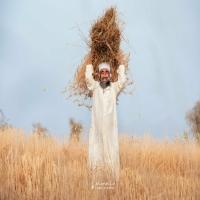 """صور من موسم حصاد القمح في ولاية """"نزوى"""" بسلطنة عُمان"""