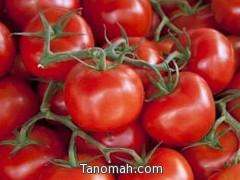 حماية المستهلك : قاطعوا الطماطم أسبوعاً فالسبب جشع التجار