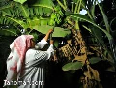 تقرير مصور : مزارع قرية ذي عين التراثية