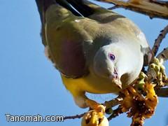 بالصور ...طبيعة عسير تستقبل أسراب الطيور المهاجرة