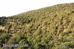 الغابات الجنوبية بالمملكة مهددة بالتدهور