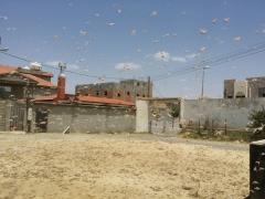 """أسراب """"الجراد """" تداهم جنوب محافظة النماص"""
