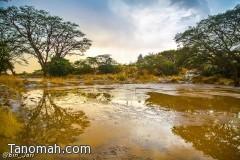 أمطار النماص في صور