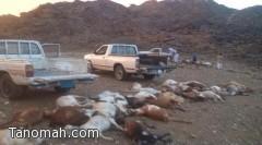 صاعقة رعدية تقتل 40 رأساً من الأغنام في بارق