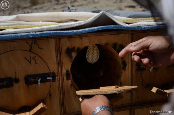 """بالصور: رحلة جني """"عسل بيشة"""" في 45 يومًا"""