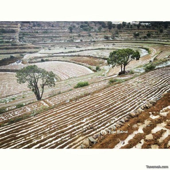 المدرجات الزراعية في بني مازن تكتسي بالثلوج