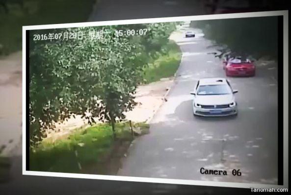 بالفيديو: نمر ينقض على فتاة في حديقة