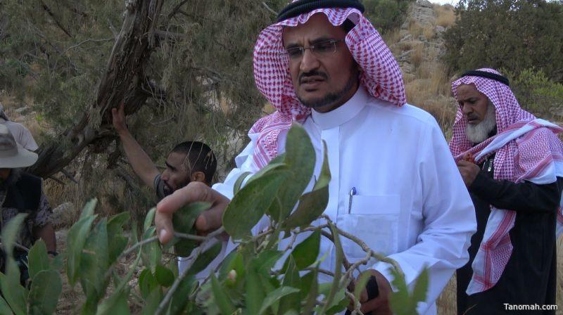 سلسلة التعريف ببعض النباتات في #تنومة لـ د أحمد بن سعيد بن قشاش