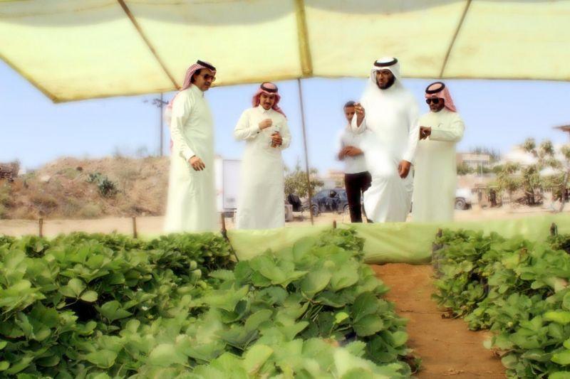 العمرة يقف على أول مزرعة سياحية للفراولة بمنطقة عسير