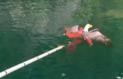 #فيديو : شاهد اخطبوط يصيد نسر